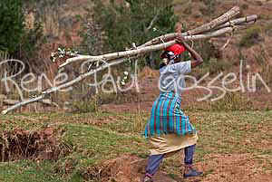 Lesotho images Wood gatherer (63459 bytes)
