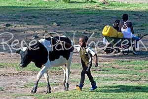 Lesotho Images Young Herd Boy and cow