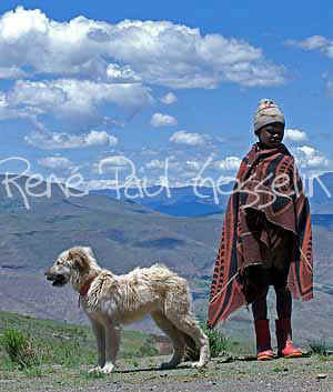 Lesotho images Young shepherd and dog  (63364 bytes)